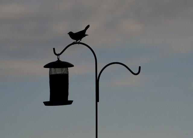 Free bird silhouette bird feeder perched animal