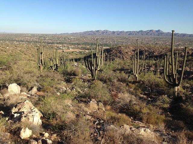Free desert arizona cactus