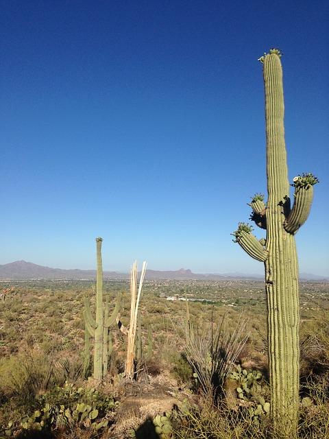 Free desert cactus arizona