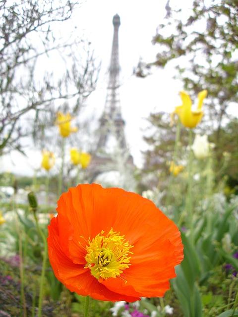 Free poppy paris red eiffel tower flower tower