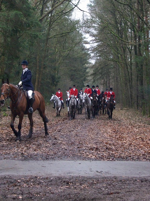 Free horses hunting bos autumn dogs drag red jackets