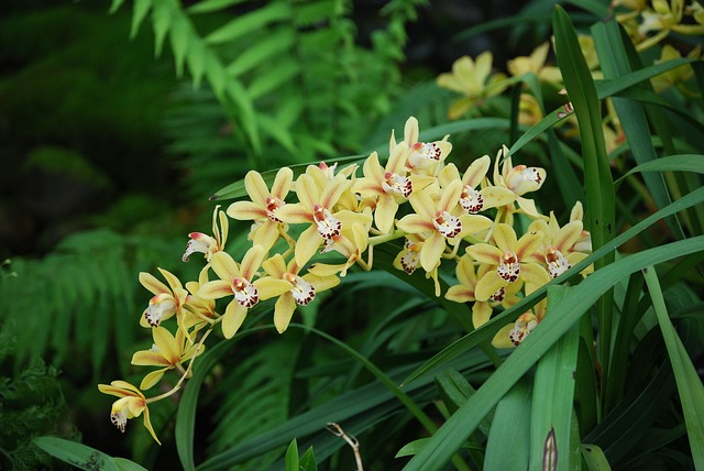 Free orchid orchidaceae flower lovely bloom flora