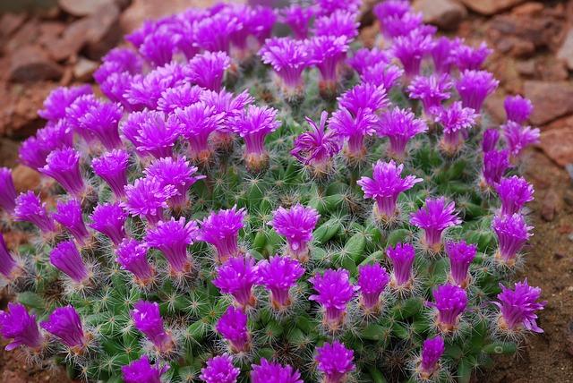Free cactus cactaceae desert flower spiky thorns