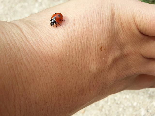 Free ladybug lucky charm luck beetle siebenpunkt