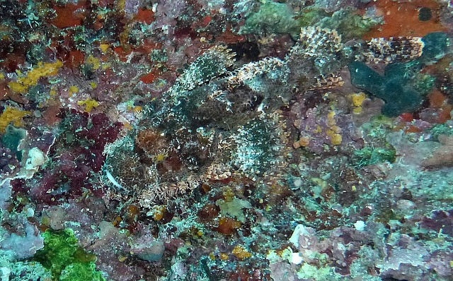 Free stone fish camouflage hide diving sea waiting off