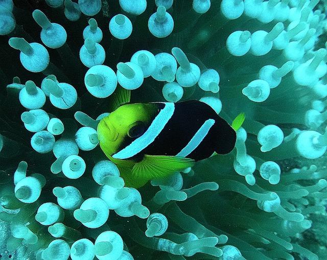 Free reef fish meeresbewohner exot underwater coral