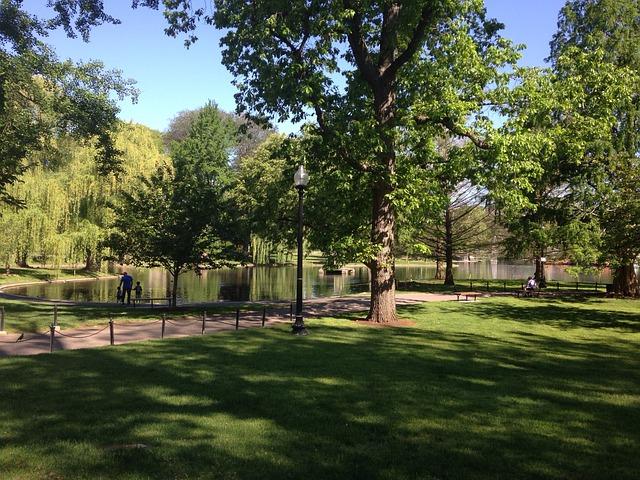 Free park boston lake outdoors trees pond nature