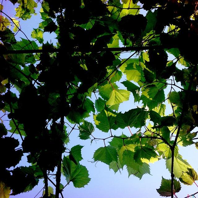 Free leaf leaves green nature tree sky light summer