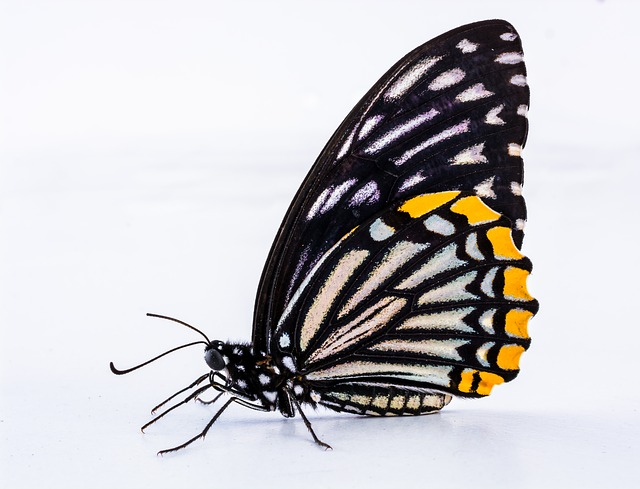 Free butterfly insect close