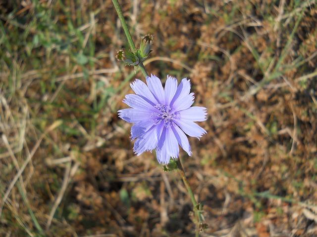Free flower garden flowers bloom petals nature purple