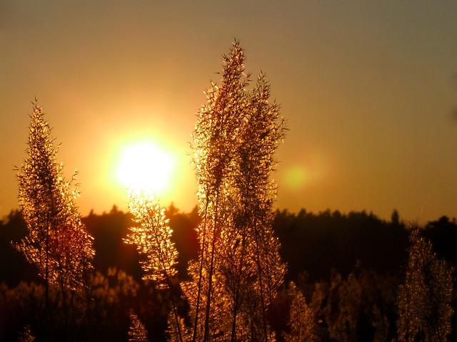 Free sun sunshine sunset light west landscape summer