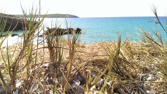 Free nature sea grass peace summer sardinia