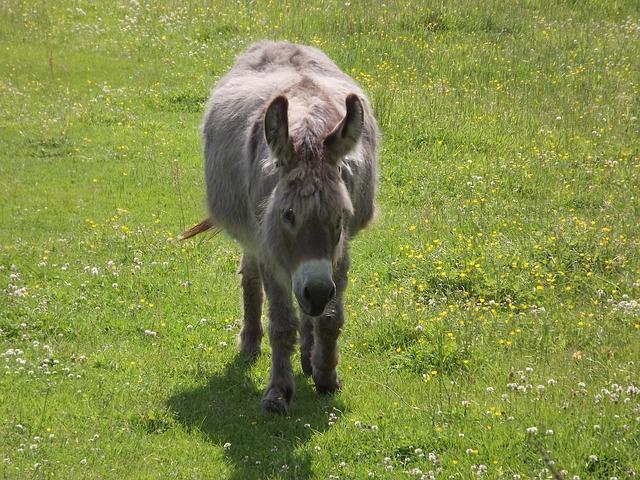 Free donkey pasture mule livestock