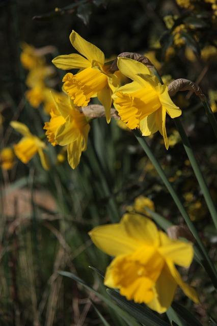 Free garden petals nature flowers flower spring petal