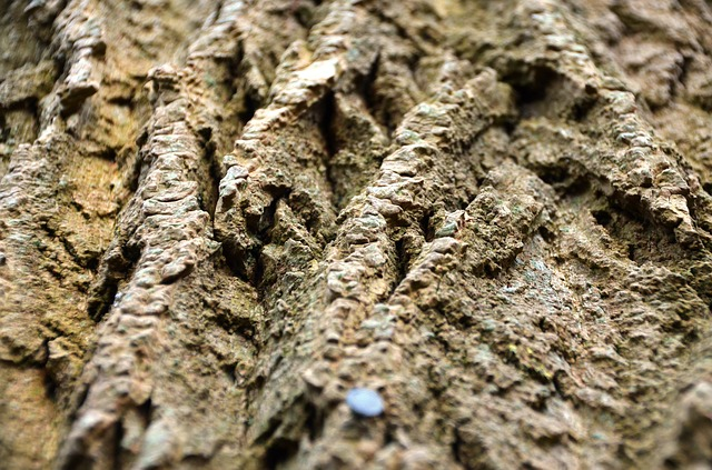 Free Photos: Bark tree log wood | Daniel Steinke