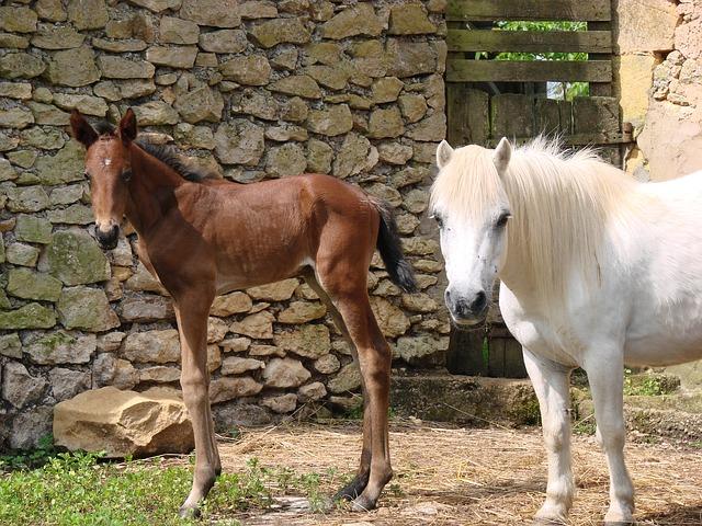 Free animals horse foal pony shetland filly petit
