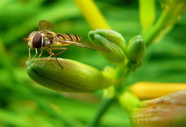 Free hover wasp hoverfly insect insect macro nature