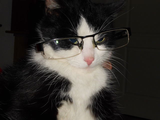 Free cat with glasses cat crafty cat