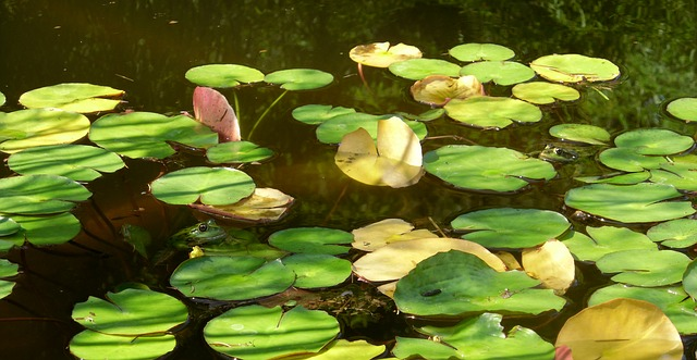 Free frogs wildlife water lilies water