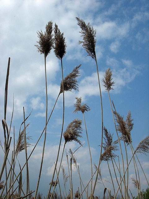 Free high dry grass sky the wind the movement of