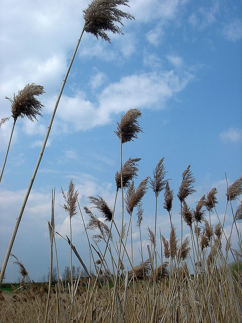 Free dry grass high sky the wind the movement of