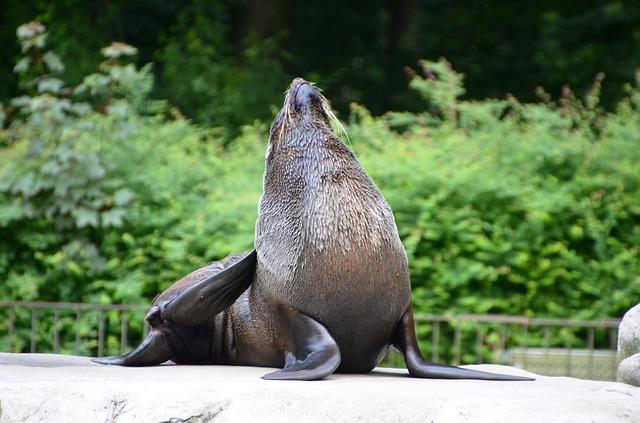Free sea lion animal funny
