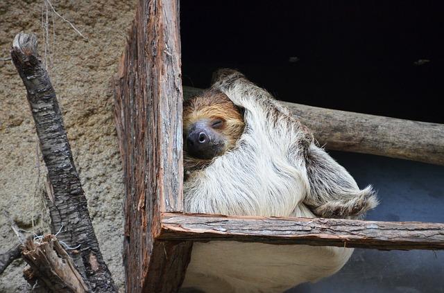 Free sloth animal lazy sleep rest