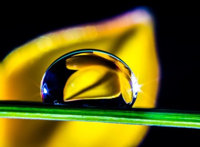 Free drop of water drip blade of grass flower macro