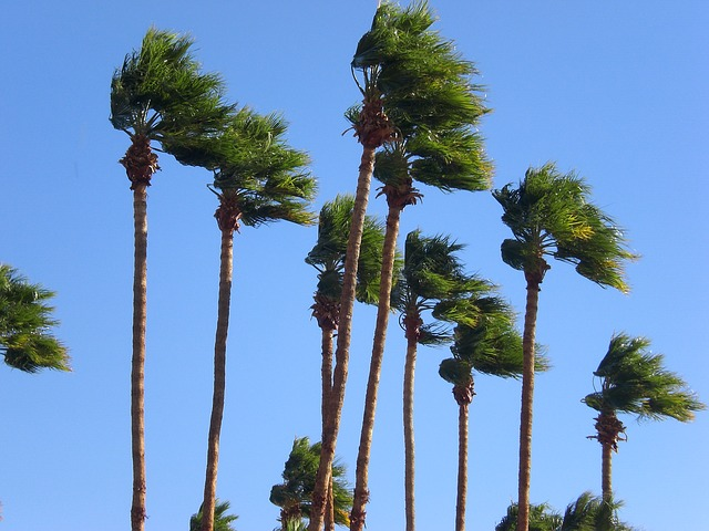 Free palm trees windy sky