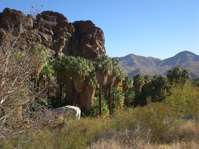 Free palm canyon california desert