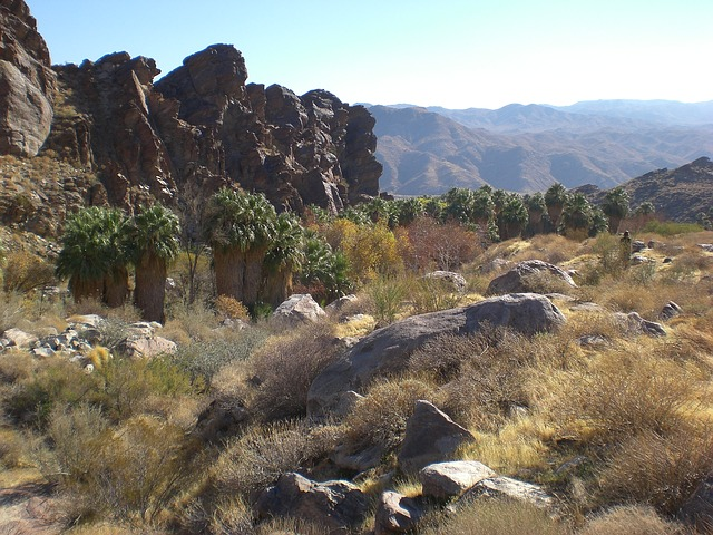Free palm canyon nature palm trees california desert