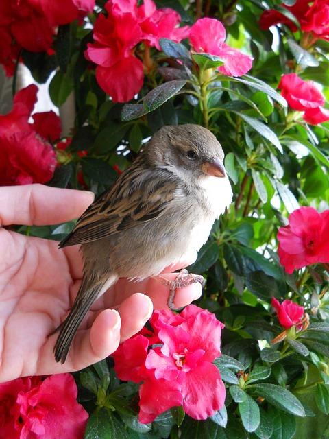 Free sparrow bird brown feather flowers flower