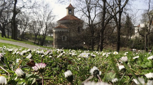 Free spring flowers flower spring flowers bee sunshine