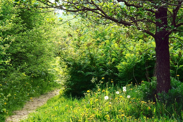 Free path sunlight forest way nature trees countryside