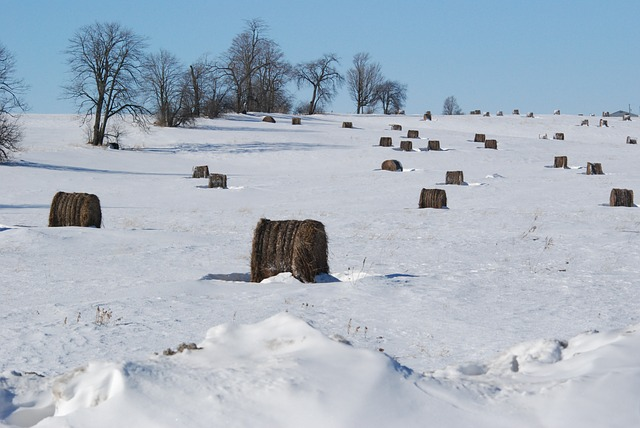 Free snow cold trees winter nature weather hay