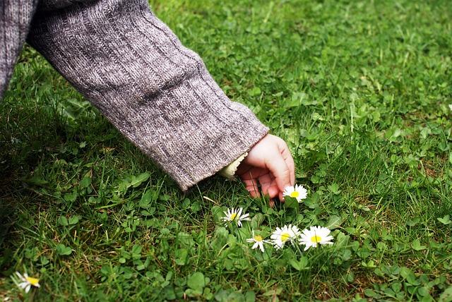 Free child's hand pick flowers daisy