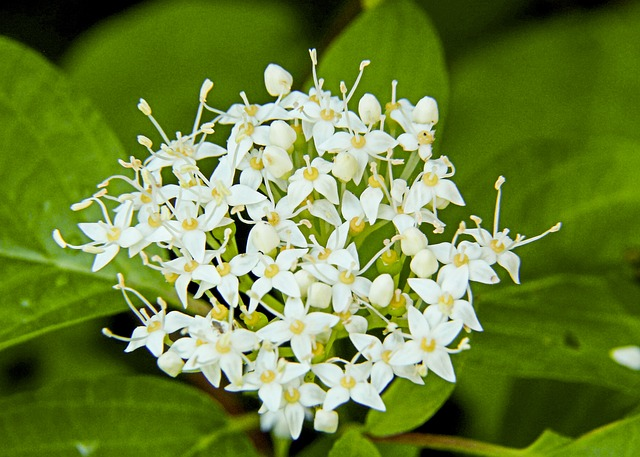 Free tiny wild plant white blossom forest leaves