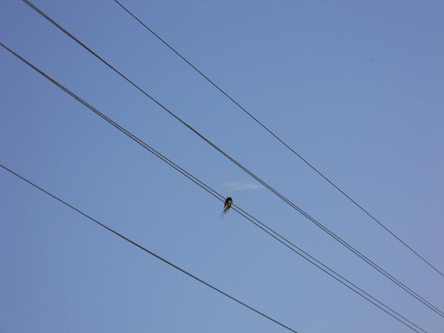 Free silhouette bird wire sky blue sky alone birds
