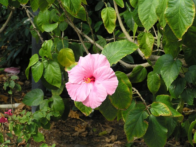 Free flower spring sunshine