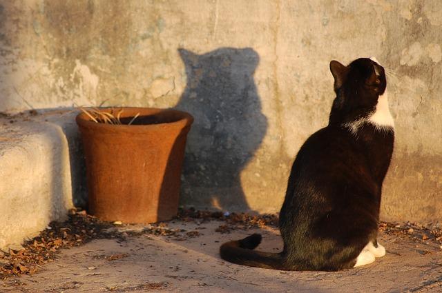 Free cat shadow profile