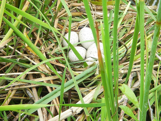 Free eggs the nest water bird shelter safety