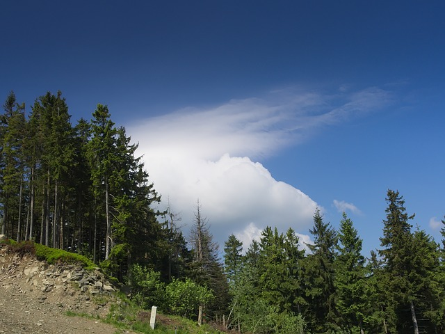 Free cloud top las view landscape beskids poland