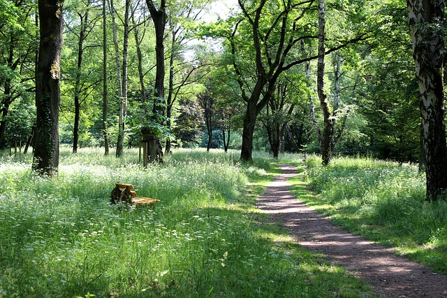 Free forest path bank rest idyll spring forest meadow