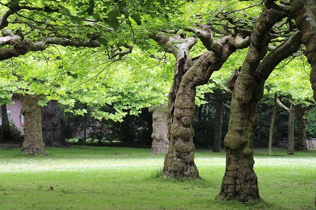 Free tree trees log bark aesthetic nature landscape