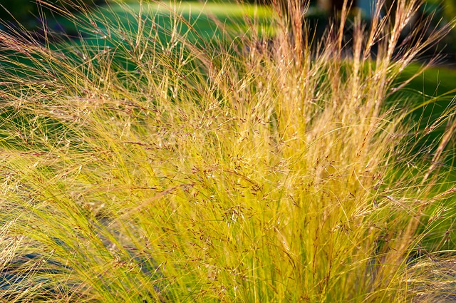 Free grass back light halme girl hair blades of grass
