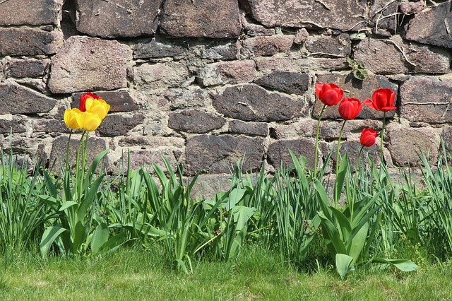 Free nature tulips wall easter monastery petersberg