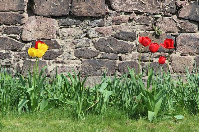 Free Photos: Nature tulips wall easter monastery petersberg | Rocho Grande