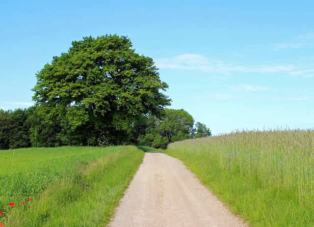 Free tree individually away lane nature meadow pasture