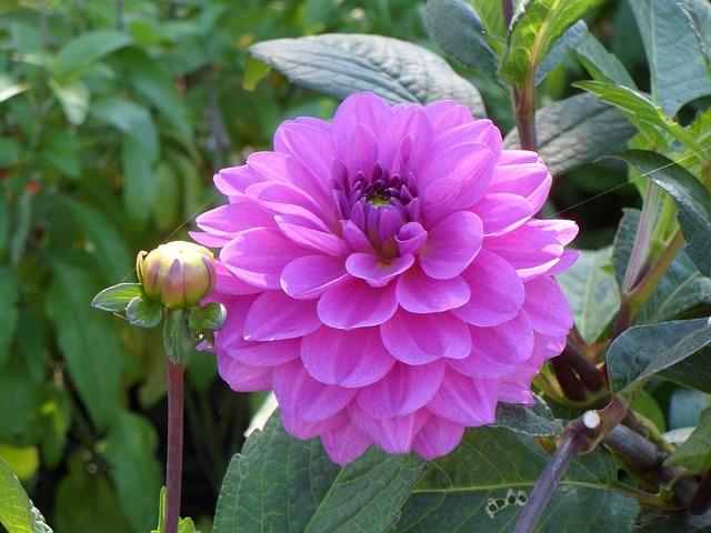Free flower nature spring plant pink macro garden