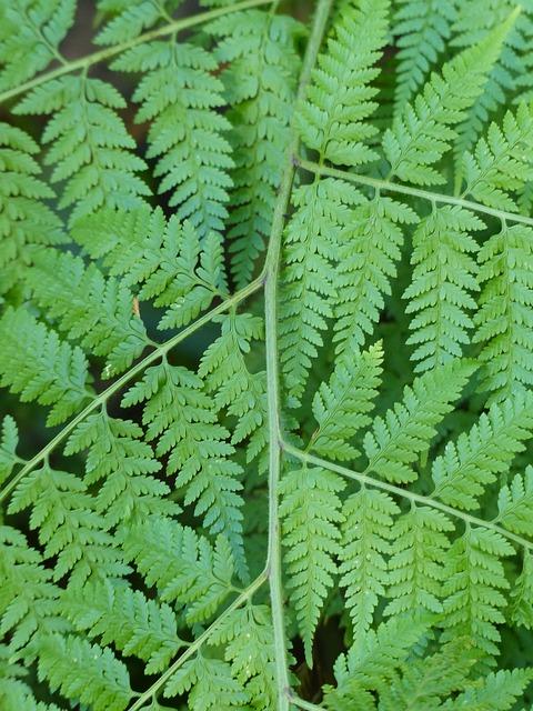 Free fern bracken leaf green background